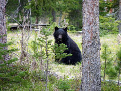 Bear Sighting Near Pine Lake Middle School